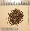 Explosia Lovex S060-02